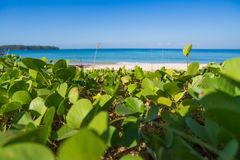 Spiaggia con erba Fotografia Stock Libera da Diritti