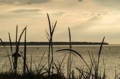 Spiaggia con erba asciutta alta al tramonto Fotografia Stock