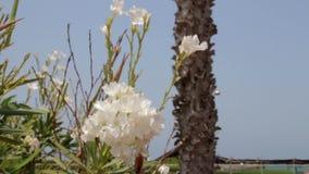 Spiaggia con i fiori e la palma archivi video