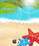 Spiaggia con i rami e le stelle marine della palma Fotografia Stock Libera da Diritti