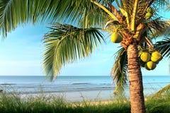 Spiaggia con il cocco ed il mare Fotografie Stock Libere da Diritti