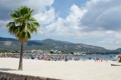 Spiaggia con l'albero immagine stock