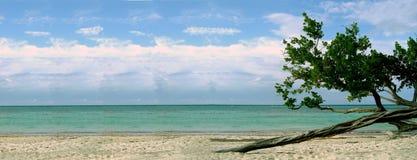 Spiaggia con l'albero torto Fotografia Stock Libera da Diritti