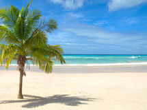 Spiaggia con la palma Fotografia Stock
