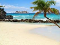 Spiaggia con la palma Immagine Stock