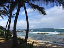 Spiaggia con la palma Fotografie Stock Libere da Diritti