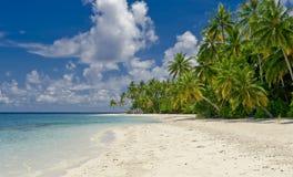 Spiaggia con la palma di noce di cocco sull'isola tropicale Fotografia Stock Libera da Diritti