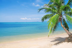 Spiaggia con la palma ed il mare di noce di cocco Fotografia Stock Libera da Diritti