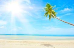 Spiaggia con la palma sopra la sabbia Immagini Stock
