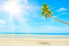 Spiaggia con la palma sopra la sabbia immagine stock