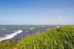 Spiaggia con le canne Fotografia Stock