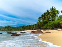 Spiaggia con le palme Fotografia Stock