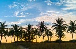 Spiaggia con le palme Immagine Stock Libera da Diritti