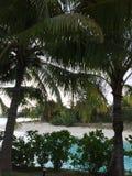 Spiaggia con le palme Fotografie Stock Libere da Diritti