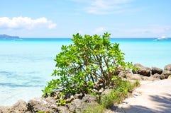 Spiaggia con le rocce in acqua Immagine Stock