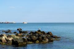 Spiaggia con un gabbiano Immagini Stock