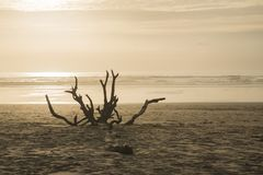 Spiaggia con una smagliatura al tramonto Fotografie Stock Libere da Diritti