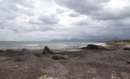 Spiaggia coperta di alghe dopo la tempesta Fotografie Stock Libere da Diritti