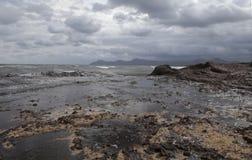 Spiaggia coperta di alghe dopo la tempesta Immagine Stock