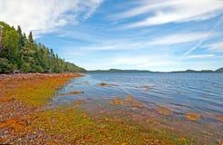 Spiaggia costiera una bassa marea Fotografia Stock Libera da Diritti