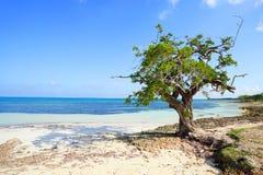 Spiaggia Cuba di Guardalavaca Fotografia Stock