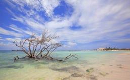 Spiaggia del bambino Fotografie Stock Libere da Diritti