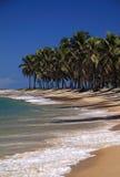 Spiaggia del Brasile Maceio Gunga Fotografia Stock Libera da Diritti