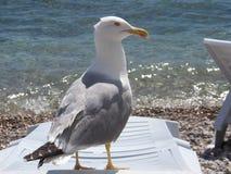Spiaggia del capo Immagine Stock