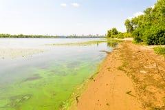 Spiaggia del fiume di Dnieper Fotografia Stock Libera da Diritti