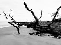 Spiaggia del legname galleggiante immagini stock libere da diritti