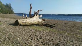Spiaggia del legname galleggiante Fotografia Stock Libera da Diritti