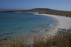 Spiaggia del leopardo - Falkland Islands Fotografia Stock