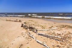 Spiaggia del Mar Baltico in Sobieszewo Fotografia Stock Libera da Diritti