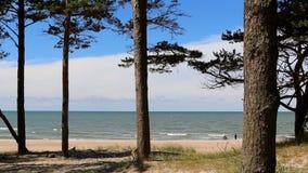 Spiaggia del Mar Baltico tramite i pini archivi video