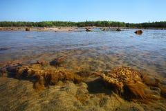 Spiaggia del mar Bianco sull'isola di Solovetsky Fotografie Stock