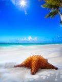 Spiaggia del mare di Art Beautiful sull'isola dei Caraibi fotografia stock libera da diritti