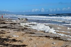 Spiaggia del nord dopo l'uragano Irma Fotografia Stock