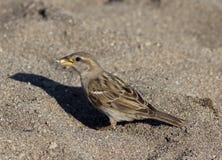 Spiaggia del passero fotografia stock libera da diritti
