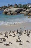 Spiaggia del pinguino immagine stock