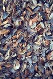 Spiaggia del ` s del pescatore in pieno delle conchiglie variopinte differenti Fotografie Stock Libere da Diritti