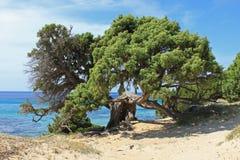 Spiaggia del sulla del marittimo de Pino Fotografía de archivo