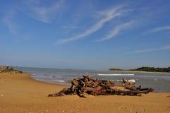 Spiaggia dell'estuario della linea costiera con il cielo nello Sri Lanka Immagini Stock Libere da Diritti