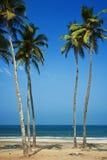 Spiaggia dell'India - di Goa - di Agonda Immagini Stock Libere da Diritti