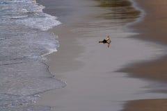 Spiaggia dell'India - di Goa - di Vagator Fotografie Stock Libere da Diritti