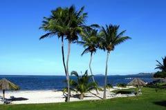 Spiaggia dell'isola allineata della palma Fotografia Stock Libera da Diritti