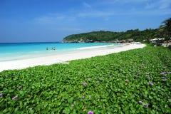 Spiaggia dell'isola dell'ipomoea Fotografia Stock