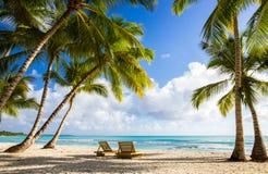 Spiaggia dell'isola di Saona Fotografia Stock