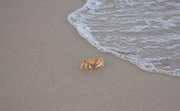 Spiaggia dell'oceano del granchio Immagini Stock Libere da Diritti