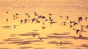 Spiaggia dell'oro Fotografia Stock