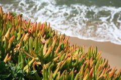 Spiaggia della California Fotografie Stock